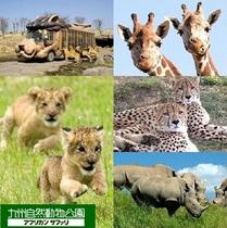 九州自然動物公園「アフリカンサファリ」は車で45分です。