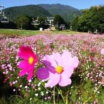黒姫コスモス園〜リフトで空中散歩