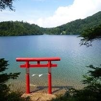 【夏】大沼池(イメージ)