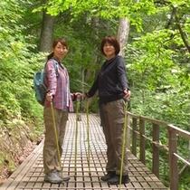 ノルディックウォーク 白神の森 遊山道コース