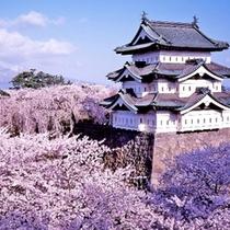 弘前公園桜