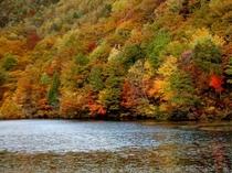 大沢沼の紅葉