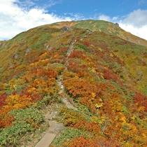 草木が彩る紅葉シーズン
