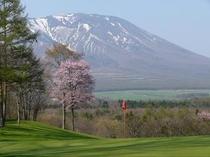 春 雫石ゴルフ場 から松17番桜