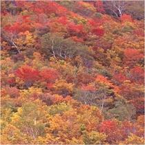 秋 紅葉イメージ(赤)500x500