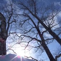 冬 スキー場晴天