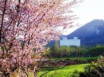 ホテル外観(昼・春)