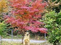 和歌山の紅葉 きれいですよ