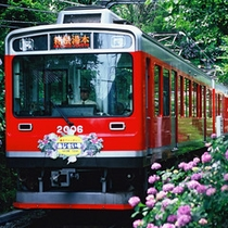 *箱根あじさい電車は、例年6月中旬~7月中旬に見頃を迎えます。