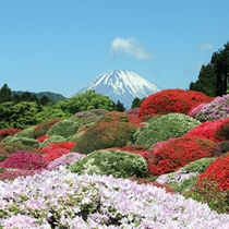 *【つつじ】小田急・山のホテルでは、毎年5月ごろに約30種3000株のツツジをご覧いただけます。