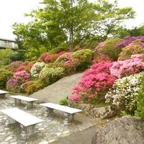 *強羅公園5月の風景