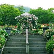 *箱根強羅公園のローズガーデン