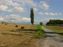丘の景色2