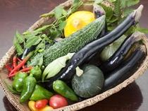 ■女将が旅館裏にある自家農園で栽培の野菜