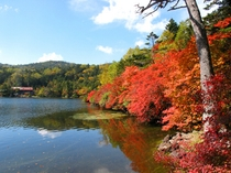 白駒の池・紅葉