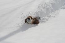 看板犬ノース