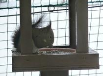 リスと一緒に朝食はいかがですか?