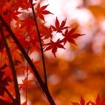 ○紅葉の季節は色鮮やかな景色を望めます