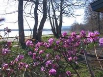 春のサロマ湖