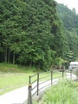 ほたる(遊歩道)