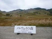 映画「ノルウェイの森」ロケ地。神埼郡神河町峰山高原・砥峰高原