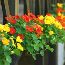 *色とりどりの花がお迎えします