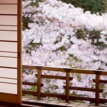 【館内から眺められる桜風景】
