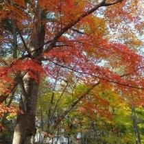 軽井沢、秋の風景
