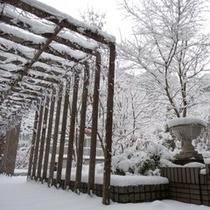 パティオ(冬の風景)