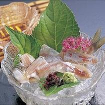 【夏限定】新鮮 絶品鮎のお造り