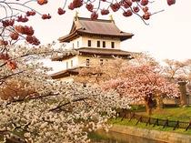 【桜と松前城】