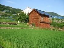 田んぼからの風景「本の家」と「本館」