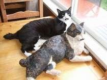我家の猫、本物のチャオとその彫刻コピー