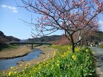 下賀茂の桜まつり