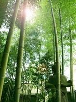 【館内】力強く真っすぐ天に向かって伸びる竹林と、竹林が作り出す木漏れ日に、日本の風情を感じます。