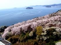 当館スカイラウンジからの桜の眺め。テラスに出て、爽やかな海風に吹かれながら写真撮影はどうですか^^