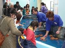 【竹島水族館】お子様にも大人気!さわりんプール