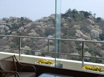 客室からの桜と海