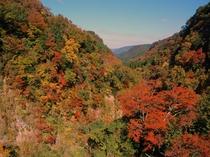 九酔渓の景色紅葉