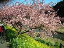 南の桜まつり