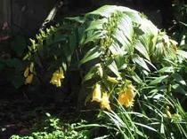 秋の中庭1