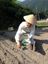 蕎麦栽培 2 種まき