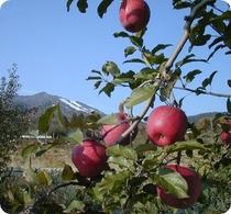 りんごと高社山