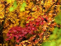 秋になると紅葉が真っ赤に染まります*。