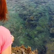 【熱帯魚の家】海に入らなくても熱帯魚が見られる人気スポット(当館から車で15分)