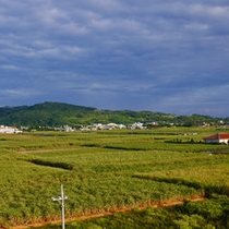 【さとうきび畑】島の耕地面積75%が「さとうきび畑」。のどかな風景が広がります