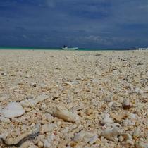 【ハテの浜】美しい白砂には色んな貝やサンゴが落ちていてちょっとした宝探し気分