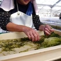 【海ぶどうの養殖場】温かい島人が気さくに案内してくれますよ。