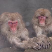 地獄谷のお猿さんはとっても気持ちよさそうにご入浴。