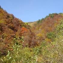 志賀高原と並んで紅葉の名所「秋山郷」